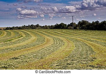 Freshly mown hay under dramatic sky - Freshly mown hay field...