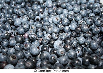 Freshly picked blueberries - what a wonderful day it is when...