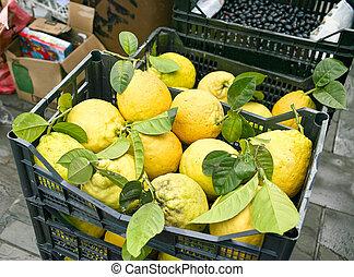 freshly picked lemons in basket