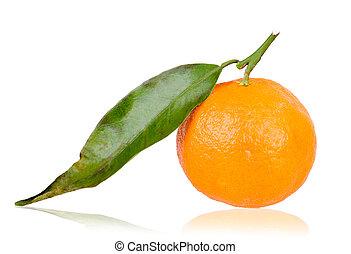 freshly picked mandarin
