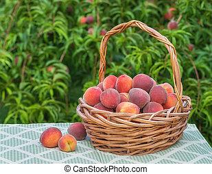 Freshly picked peach fruits in basket