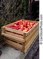 Freshly picked red apples in wooden crate