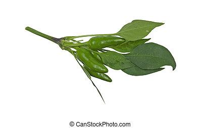 small green hot pepper