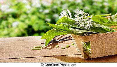 Freshly picked wild garlic for the kitchen