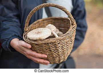 Freshly picked wild mushrooms from the local forest. Woman holding a wicker basket with edible mushrooms. Delicious organic mushrooms for cooking. Macrolepiota procera, the parasol mushroom