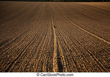 freshly plowed acre in beautiful light - freshly ploughed...