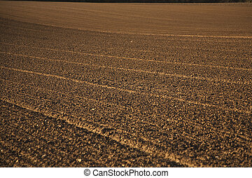 freshly plowed field in beautiful light