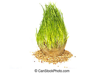 Freshly sprouted grass and seeds isolated on white background