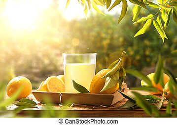 Freshly squeezed juice on wooden table in lemon grove