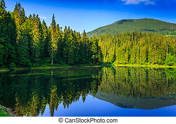 freshness near forest - landscape by the lake in the early...