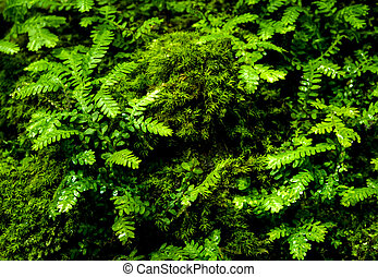 Freshness small fern leaves with moss and algae in the tropical garden