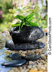 Freshness zen