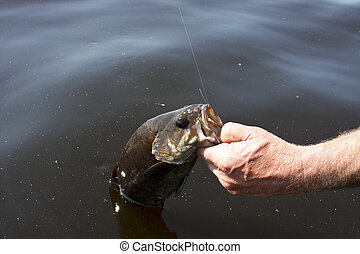 small mouth bass caught fishing a freshwater lake