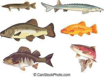 freshwater fish perch stun trout
