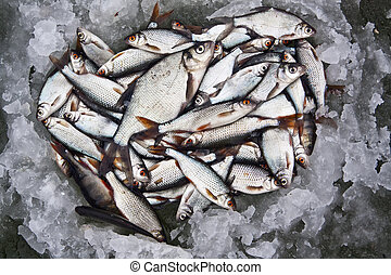 Freshwater fish caught on a fishing trip in the winter on...