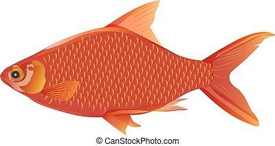 freshwater fish vector design