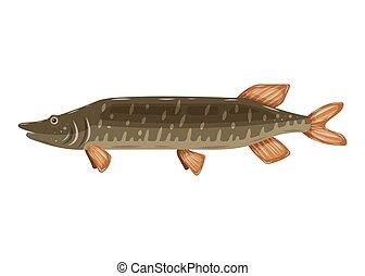 Freshwater flat icon colorful perch fish isolated on white background. Marine fresh food logo, fishing sport