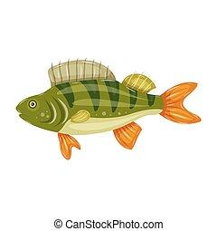 Freshwater flat icon colorful perch fish isolated on white background. Marine fresh food logo