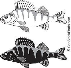 freshwater, ilustração, -, poleiro