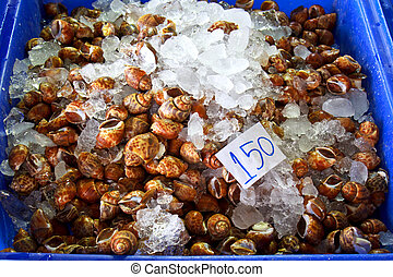 Freshwater Snail on sale in Thailand open market for food ...
