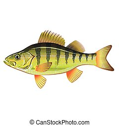 Freshwater Yellow Perch Vector Art graphic design file