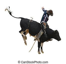 Fresian Bucking Bull with Cowboy