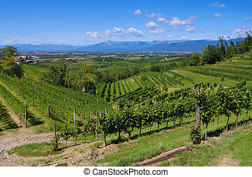 Friaul vineyards in northern Italy