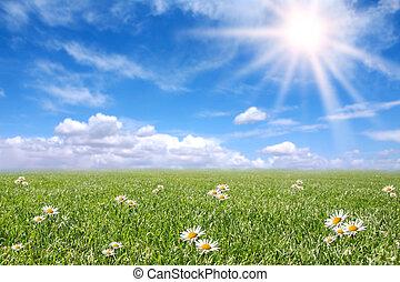 fridfull, solig, fält, äng, in, fjäder