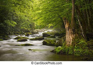 friedlich, großer rauchige gebirgs nationalpark, neblig, tremont, fluß, entspannend, naturquerformat, scenics, bei, gatlinburg, tn