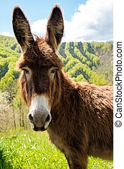 Friendly brown donkey outdoors