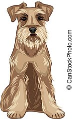 Friendly dog. Schnauzer. Vector illustration