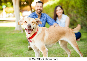 Friendly dog with her owners - Portrait of a happy and...