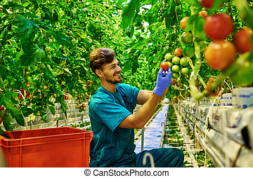 Friendly farmer at work in greenhouse