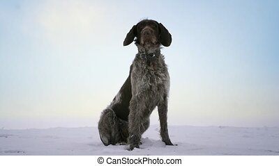 Friendly gray-black dog is sitting in snow on the hill with...