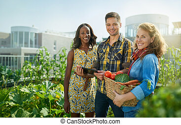 Friendly team harvesting fresh vegetables from the rooftop ...