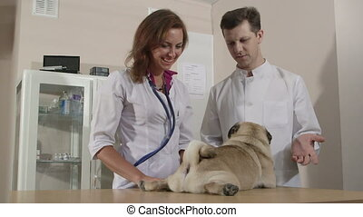 Friendly Vets Examining Pug Dog