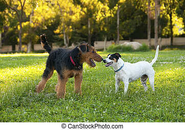 Friends - Fox Terrier refers primarily to two different...