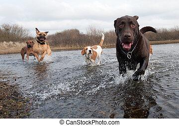 friends, labradorhundapportierhund