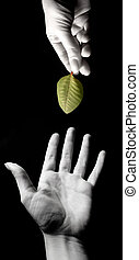 friendship - hands with a leaf on black background