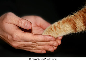 Friendship - Handshake between a man and a cat.