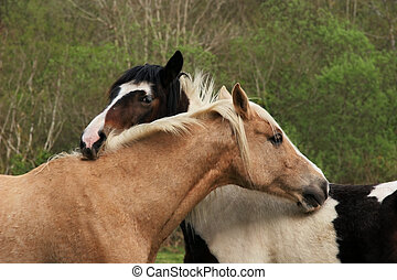 Friendship - Upper bodies of two horses, one brown and one...