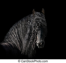 friesian stallion on a black