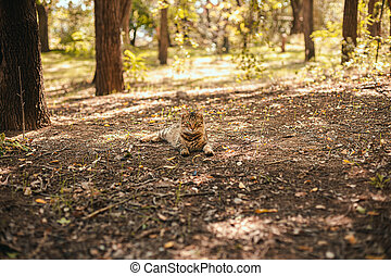 Frightened domestic cat on a green grass background in the forest.