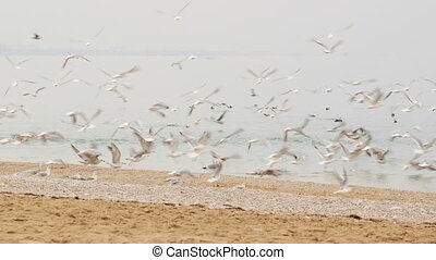 Frightened flock of seagulls flying up from the seaside