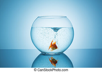 frightened goldfish in a fishbowl