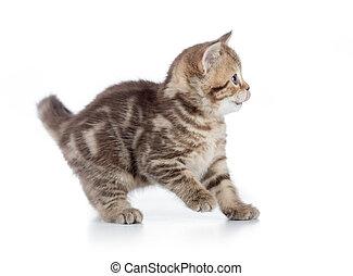 Frightened kitten cat side view