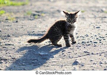 Frightened lonely tabby little kitten