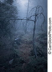 Frightening foggy forest
