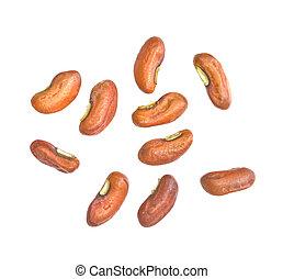 frijol, semillas, yarda, seed., largo