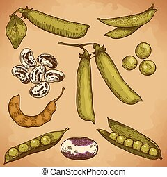 frijoles, guisantes, ilustración